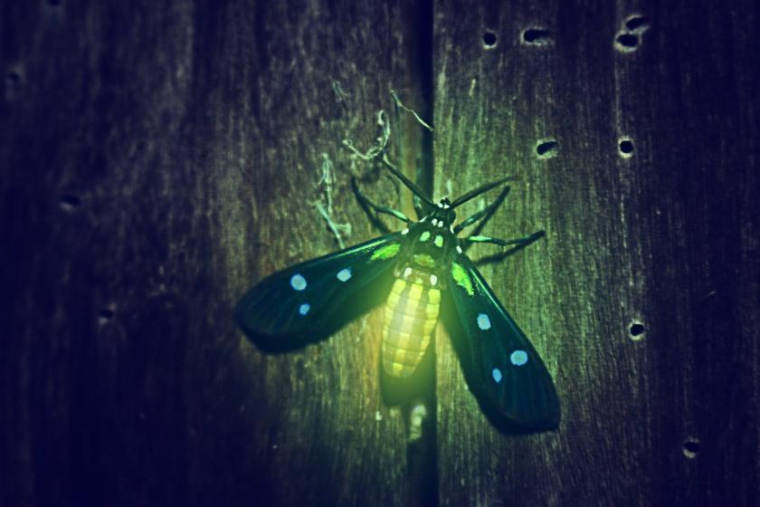A glowing firefly.