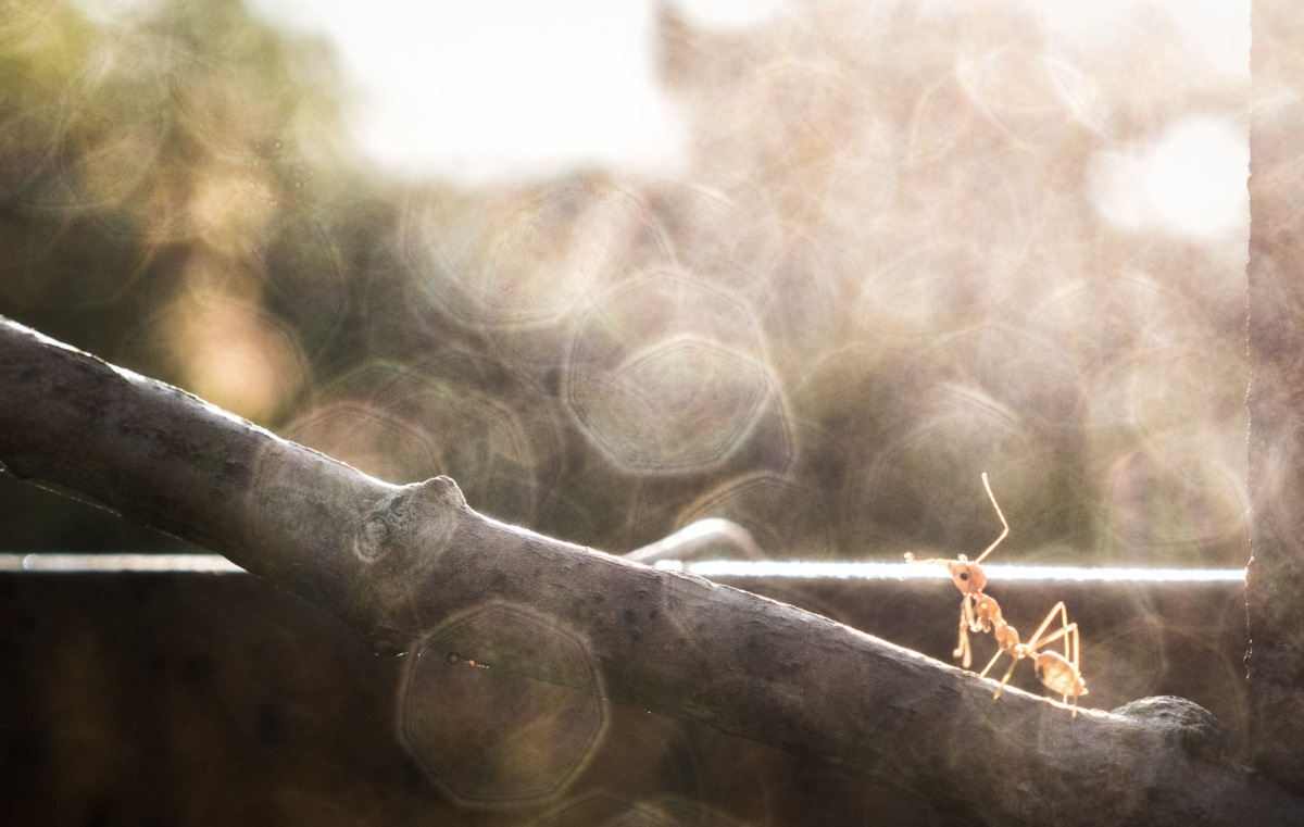 A dreamy-looking ant staring into the sun.