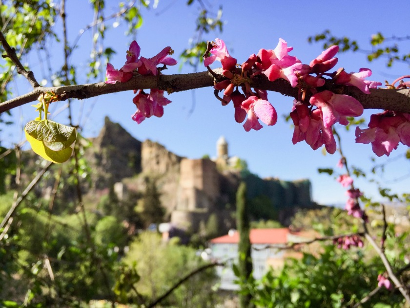 Pink flowers and a castle in the distance.