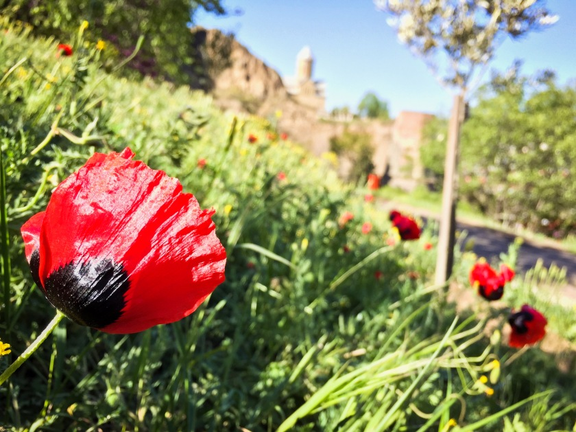 Poppies and the Tbilisi fortress.